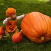 Halloween …. už i u nás??