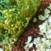 Zásady sběru, sušení a skladování léčivých rostlin